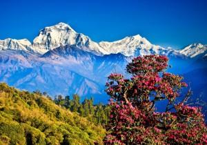 drug-addiction-nepal